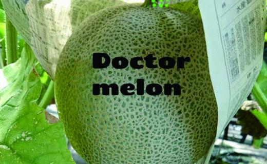 ドクターメロン
